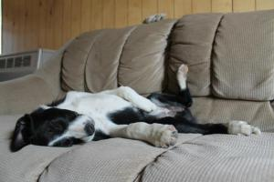 Clearly, being a cowdog is a tough life.