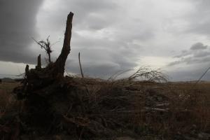 Windblown Winterkill, Dec. 1, 2012